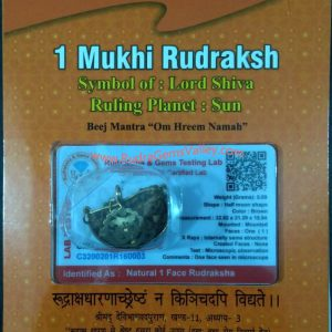 Rudraksha certified 1 mukhi (one face) beads, kaju shape (cashewnut shape) Indian pure original rudraksha beads.