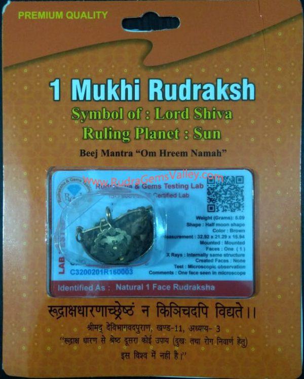 Rudraksha certified 1 mukhi (one face) beads, kaju shape (cashewnut shape) Indian pure original rudraksha beads.