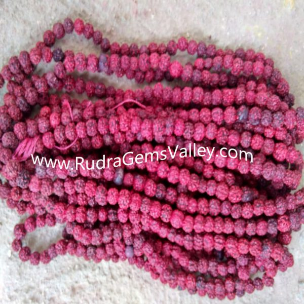 Rudraksha 5 mukhi (five face) 16mm-18mm beads string (mala of 108+1 beads), Nepali Red pure original rudraksha without knots, pack of 9 string.
