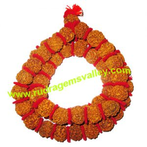 Rudraksha 5 mukhi (five face) 16mm-18mm beads string (mala of 108+1 beads), Nepali pure original rudraksha with cussion and knotted, pack of 1 string.