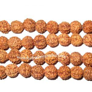 Rudraksha 6 mukhi (six face) 10mm loose beads, Indonesian pure original rudraksha, pack of 1 beads.