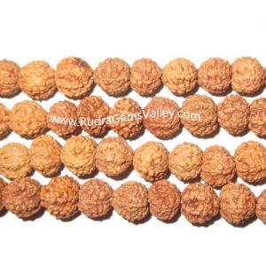 Rudraksha 7 mukhi (seven face) 10mm loose beads, Indonesian pure original rudraksha, pack of 1 beads.