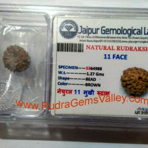 Rudraksha certified 11 mukhi (eleven face) approx 12mm-15mm beads, Indonesia pure original rudraksha beads.