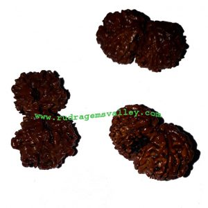 Rudraksha gauri shankar beads approx 15mm to 20mm beads, Nepali pure original rudraksha beads.