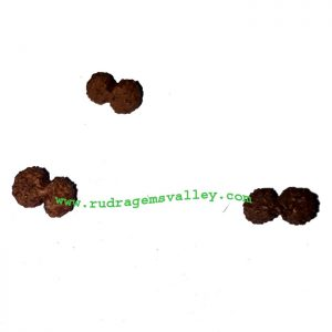 Rudraksha gauri shankar beads approx 10mm to 15mm beads, Indonesia pure original rudraksha beads.