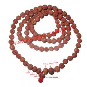 Rudraksha-indrakshi-indrani 108 beads knotted mala for removing evil effects of saturn, venus, rahu, ketu and enhancing love and affection between couples. Indonesian rudraksha 6 face, 7 face, 8 face, 9 face, 13 face, 14 face and gauri shankar 1 pcs. each