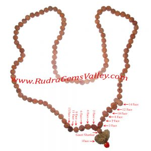 Rudraksha-indrakshi-indrani 108 beads knotted mala or Siddha Mala for all the successes and fulfilment of all the desires. Indonesian rudraksha Siddha mala of 1 face to 14 face and gauri shankar 1 pcs. each and 5 face 95 pcs. beads.